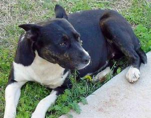 Mutt Dog For Adoption in Tyler, TX
