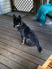 Mutt Dog For Adoption in Pacolet, SC