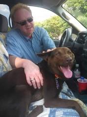 Borador Dog For Adoption in Shaw AFB, SC, USA