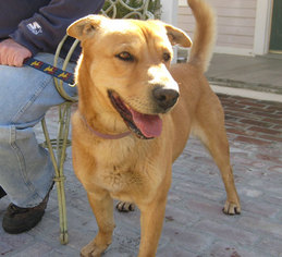Mutt Dog For Adoption in Encino, CA, USA