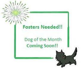 Mutt Dog For Adoption in Glasser, NJ, USA