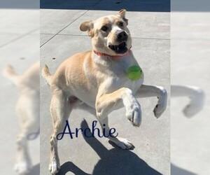 Labrador Retriever Dogs for adoption in Knoxville, IA, USA