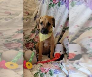 Labrador Retriever Dogs for adoption in Park Falls, WI, USA