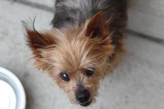 Mutt Dog For Adoption in Matawan, NJ