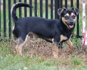 Mutt Dog For Adoption in Rock Hill, SC, USA
