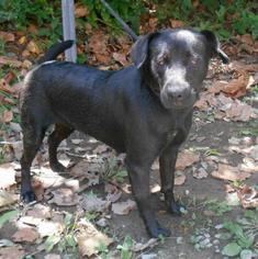 Mutt Dog For Adoption in White Bluff, TN