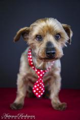 Mutt Dog For Adoption in Pearland, TX, USA