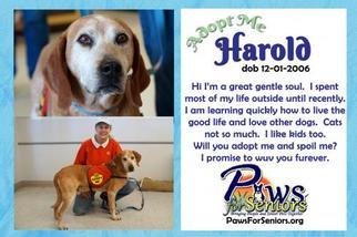 Mutt Dog For Adoption in Bealeton, VA, USA