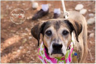 Mutt Dog For Adoption in Lago Vista, TX, USA