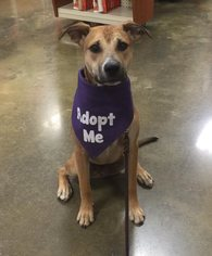 Mountain Cur Mix Dog For Adoption in Baton Rouge, LA