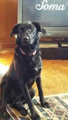 Mutt Dog For Adoption in Mission, KS, USA