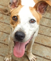 Mutt Dog For Adoption in Anderson, SC, USA