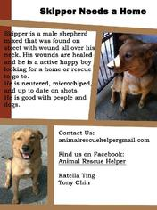 Mutt Dog For Adoption in Rancho Santa Margarita, CA