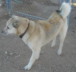 Mutt Dog For Adoption in Apple Valley, CA, USA