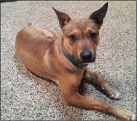Mutt Dog For Adoption in Ponca City, OK, USA