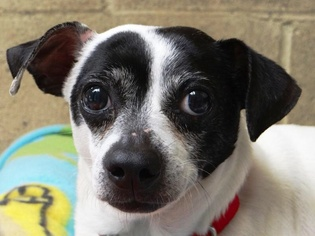 Mutt Dog For Adoption in Seal Beach, CA, USA