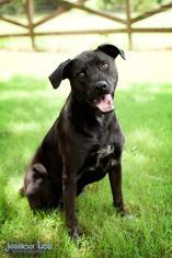 Mutt Dog For Adoption in Stone Mountain, GA