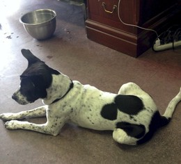 Mutt Dog For Adoption in Munford, TN