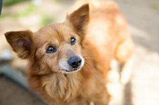Mutt Dog For Adoption in Fresno, CA, USA