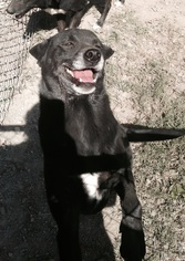 Border Collie-Unknown Mix Dog For Adoption in Albemarle, NC, USA
