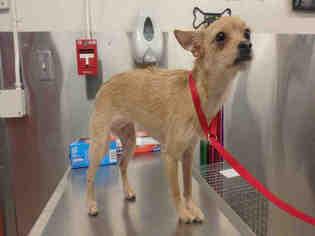 Dogs For Adoption Fairbanks Ak
