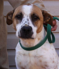 Mutt Dog For Adoption in Alton, IL, USA