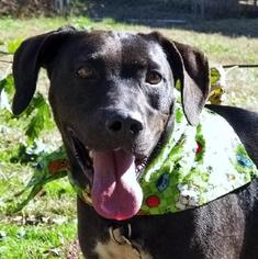 Mutt Dog For Adoption in Elizabeth City, NC, USA