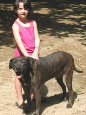Plott Hound Dog For Adoption in Cochran, GA, USA