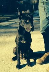 Mutt Dog For Adoption in Slidell, LA, USA