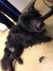 Mutt Dog For Adoption in Whitestone, NY