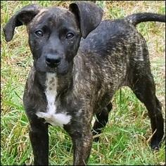 Mutt Dog For Adoption in Shreveport, LA