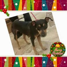 Mutt Dog For Adoption in Naples, FL, USA