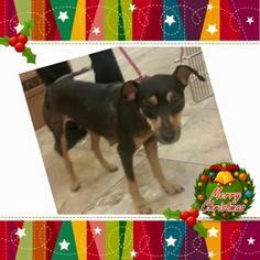 Mutt Dog For Adoption in Naples, FL