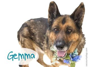 View Ad: German Shepherd Dog Dog for Adoption near