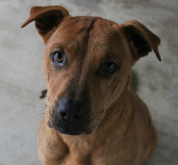 Mutt Dog For Adoption in Hilton Head, SC