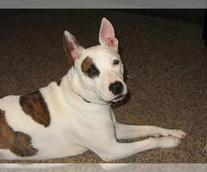 Mutt Dogs for adoption in Ponca City, OK, USA