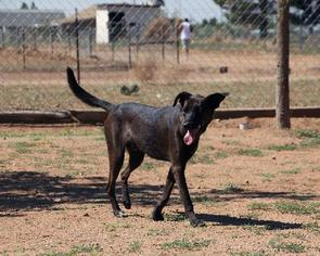Mutt Dog For Adoption in Las Cruces, NM, USA