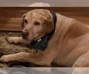 Mutt Dogs for adoption in Livonia, MI, USA