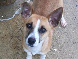Mutt Dog For Adoption in Staley, NC, USA