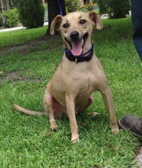 Black Mouth Cur Mix Dog For Adoption in Slidell, LA, USA