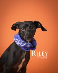 Mutt Dog For Adoption in Dallas, TX, USA