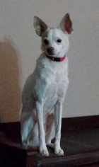 Mutt Dog For Adoption in Surprise, AZ