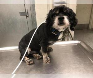 Mutt Dogs for adoption in Long Beach, CA, USA