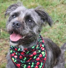 Mutt Dog For Adoption in Gibbstown, NJ, USA