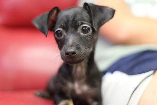 Mutt Dog For Adoption in Fresno, CA, USA