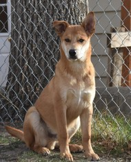 Mutt Dog For Adoption in Dodson, MT, USA