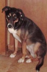 Mutt Dog For Adoption in Claremore, OK, USA