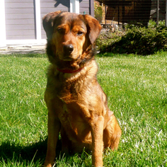 Mutt Dog For Adoption in Petaluma, CA, USA