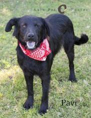 Mutt Dog For Adoption in Rockaway, NJ
