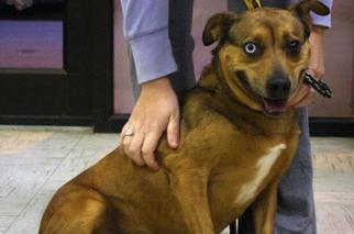 Mutt Dog For Adoption in Beckley, WV